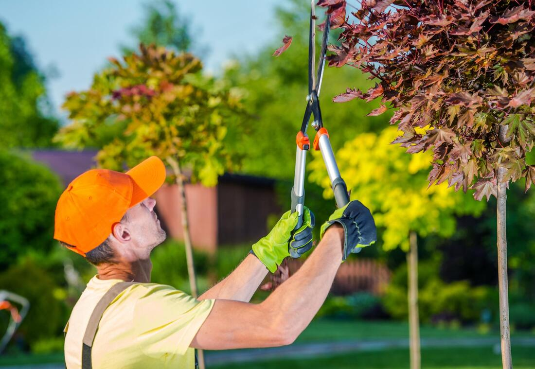 excellent professional tree care