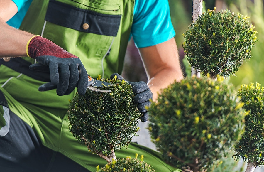 affordable, reliable tree care service