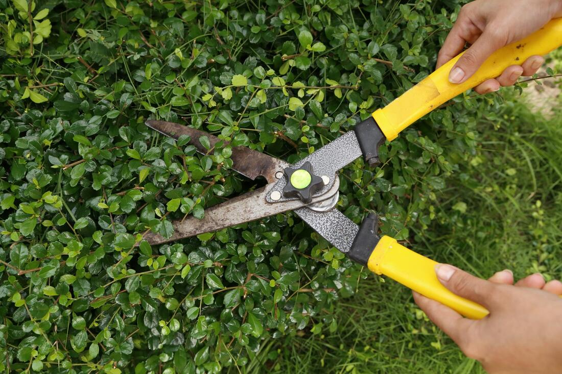 professional tree pruning near me